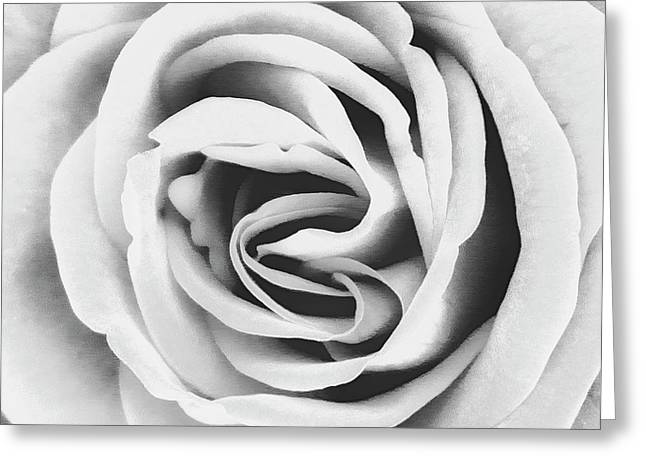 Rubellite Rose Bw Palm Springs Greeting Card by William Dey