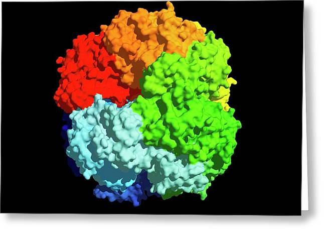 Rubisco Carbon Fixation Enzyme Molecule Greeting Card by Dr Tim Evans