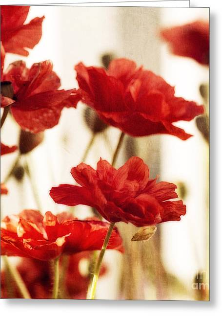 Ruby Red Poppy Flowers Greeting Card