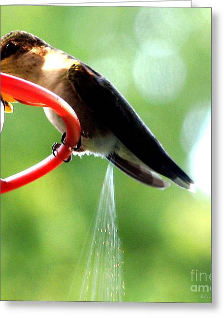 Ruby-throated Hummingbird Pooping Greeting Card