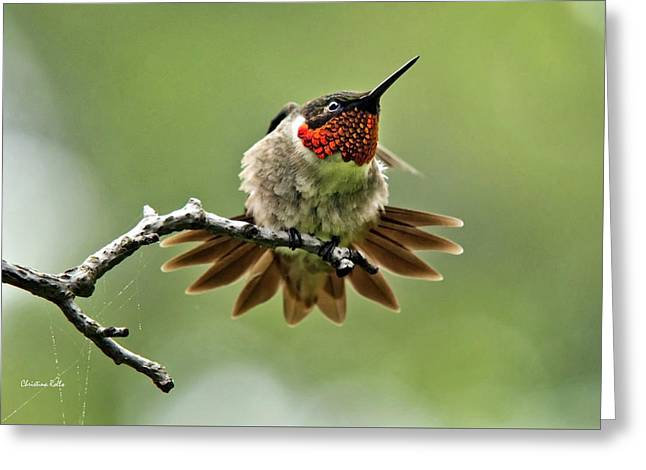 Ruby-throated Velocity Greeting Card by Christina Rollo