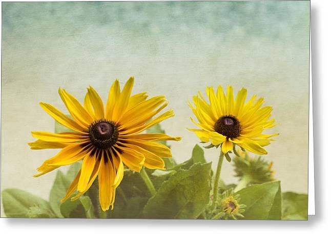 Rudbeckia Flowers Greeting Card by Kim Hojnacki