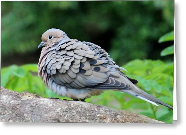 Ruffled Feathers Greeting Card by Cynthia Guinn