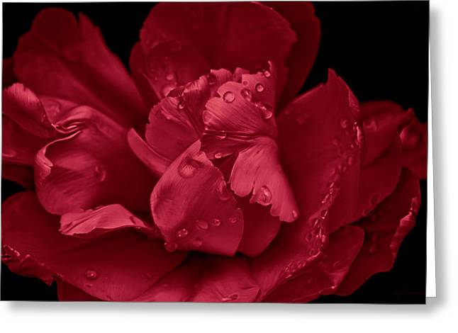 Red Ruffled Parrot Tulip Flower Greeting Card