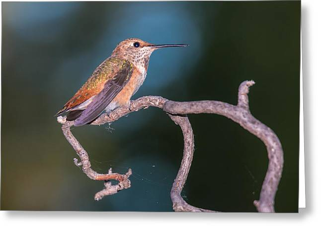 Rufous Guardian Greeting Card