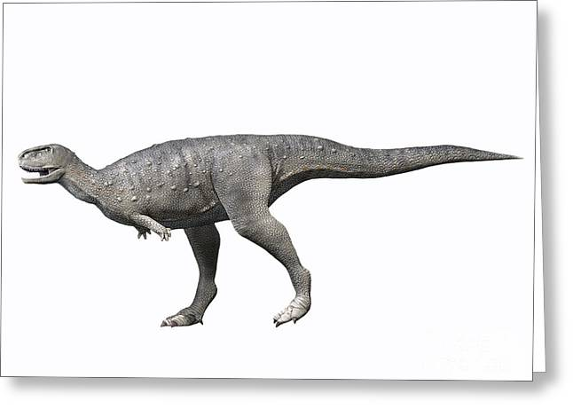 Rugops Primus, Late Cretaceous Of Niger Greeting Card