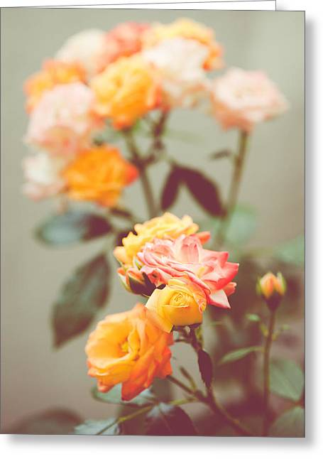 Greeting Card featuring the photograph Rumba Rose by Ari Salmela