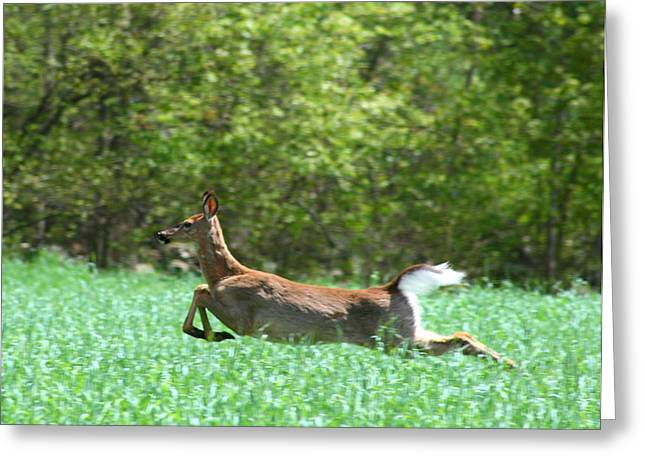 Run Forest Run Greeting Card by Neal Eslinger