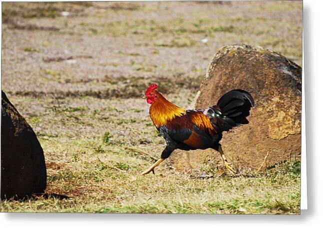 Run Run Rooster Greeting Card by Christi Kraft