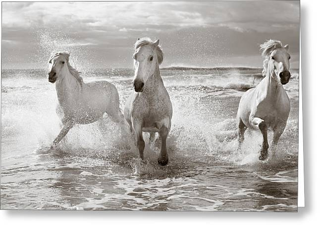 Run White Horses II Greeting Card