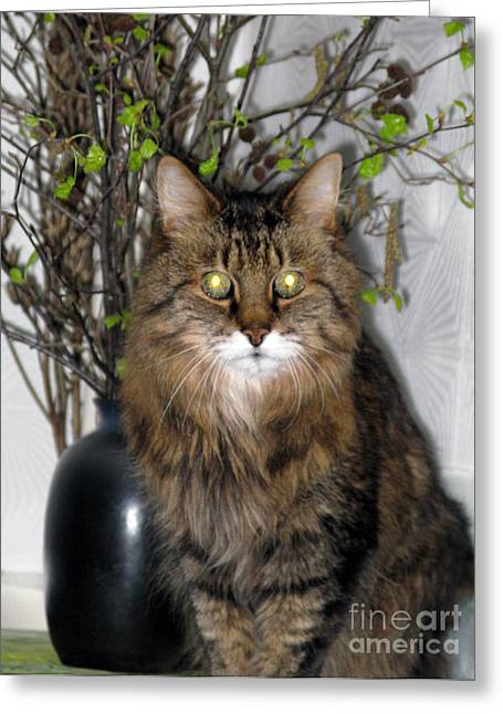 Runcius- Palm Sunday Kitty Greeting Card