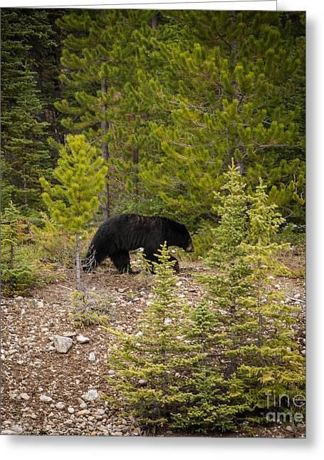 Running Bear Greeting Card