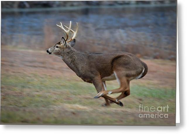 Running Buck Greeting Card
