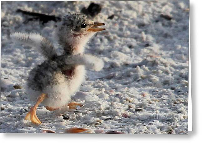 Running Free - Least Tern Greeting Card