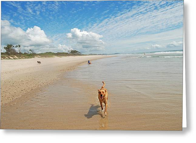Greeting Card featuring the photograph Running Free 2 by Ankya Klay