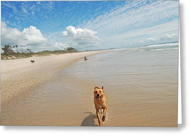 Greeting Card featuring the photograph Running Free 3 by Ankya Klay