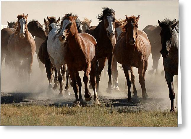 Running Free Greeting Card by Lee Raine