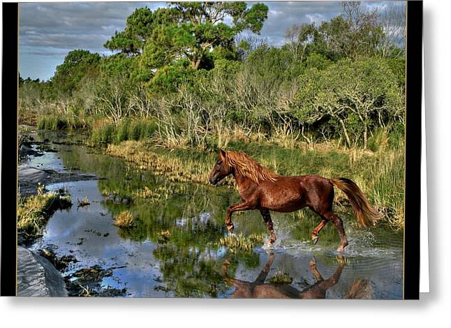 Running Free Greeting Card by Tammy Thompson