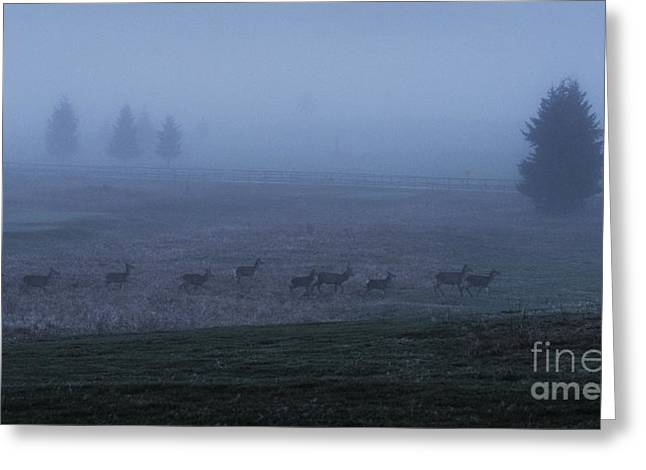 Running In The Mist Greeting Card