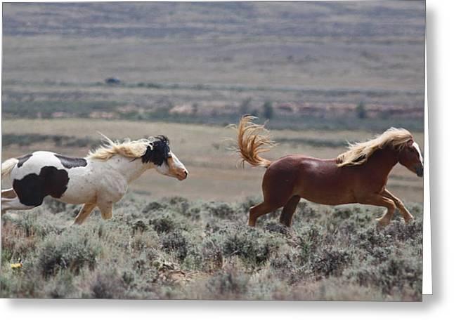 Running Mustangs Greeting Card