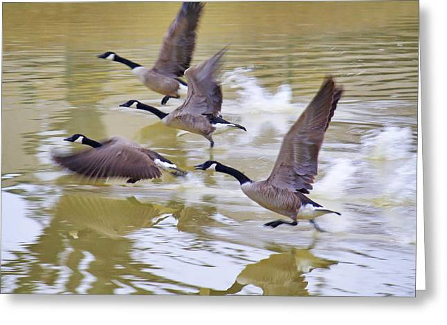 Running On Water Greeting Card by Jason Politte