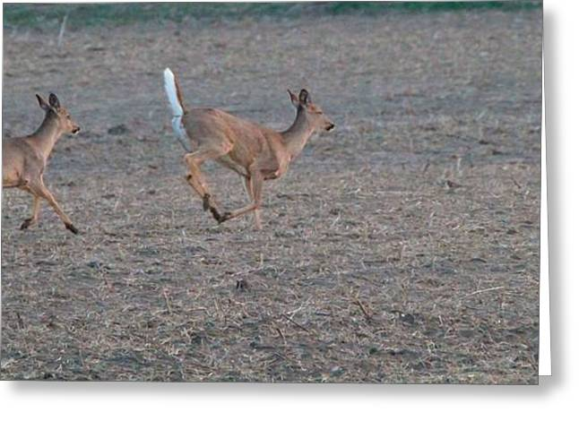 Running White-tailed Deer Greeting Card