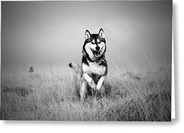 Running Wolf Greeting Card by Mike Taylor