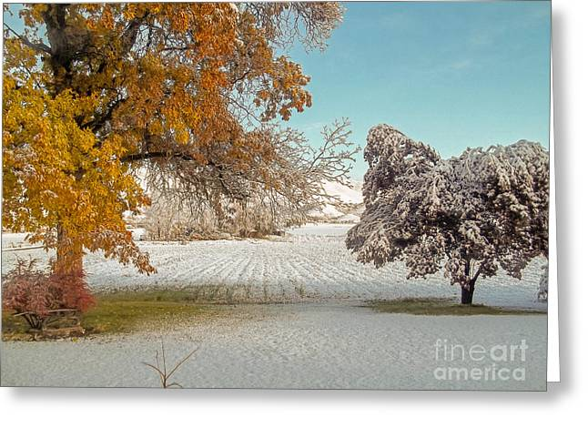 Rural Early Snow In Western Colorado  Greeting Card