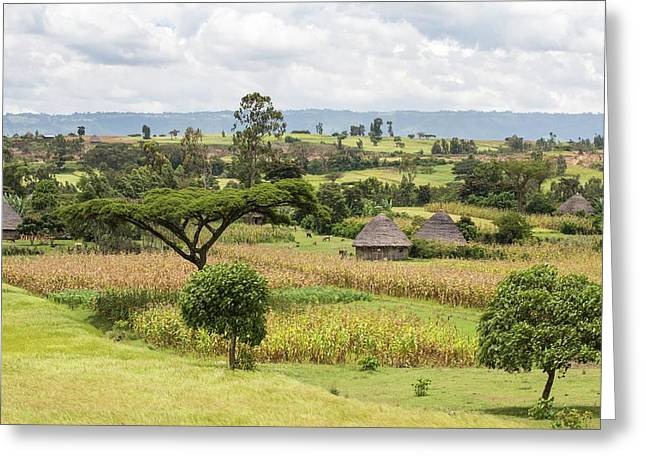 Rural Ethiopian Landscape Greeting Card