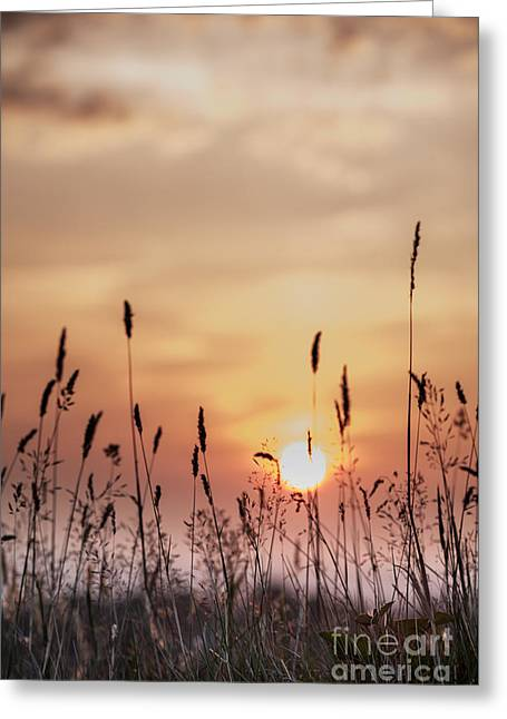 Rural Sunset Greeting Card by Jan Bickerton