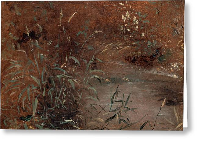 Rushes By A Pool, John Constable, 1776-1837 Greeting Card