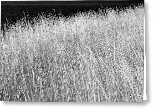 Rushes By Open Water Greeting Card by Donald  Erickson