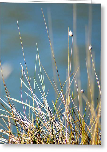 Rushes Greeting Card