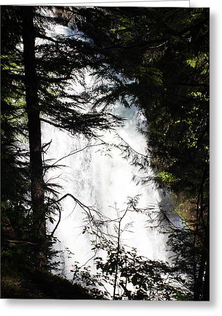 Rushing Through The Trees Greeting Card