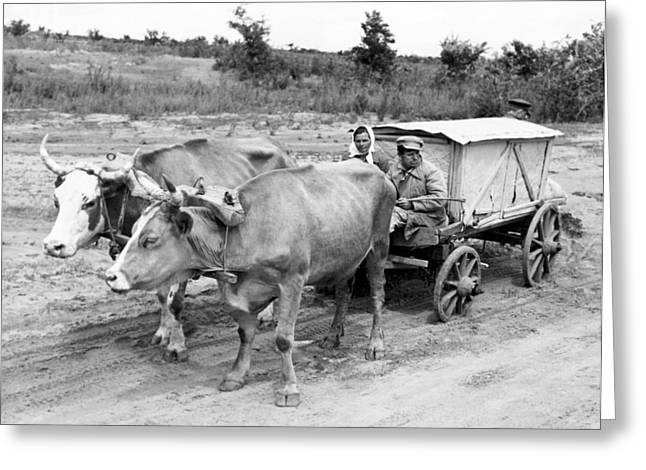 Russian Peasants With Ox Cart Greeting Card by Underwood Archives