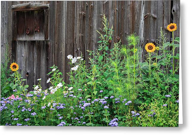 Rustic Barn Wood And Summer Flowers Greeting Card by Bill Wakeley