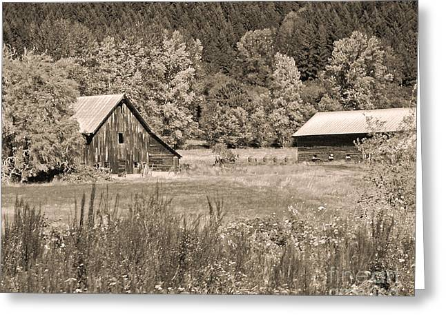 Rustic Beauty In Sepia Greeting Card by Connie Fox