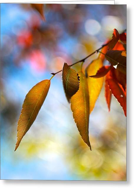 Rustling Leaves Greeting Card by Tracy Male