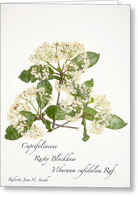 Rusty Blackhaw Greeting Card