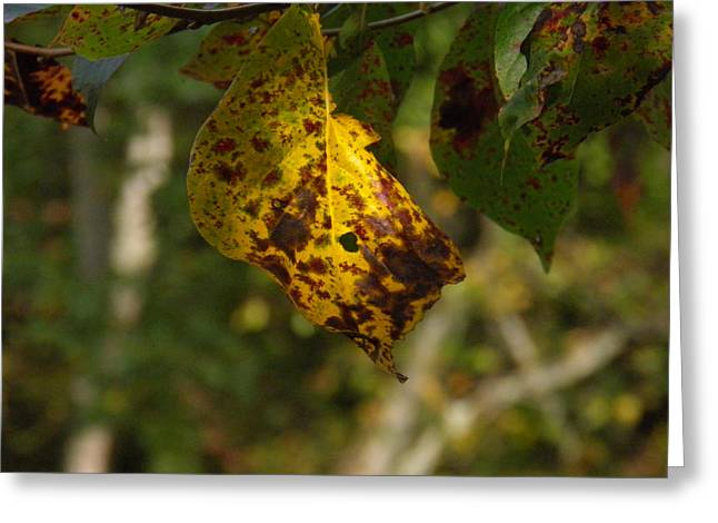 Greeting Card featuring the photograph Rusty Leaf by Nick Kirby