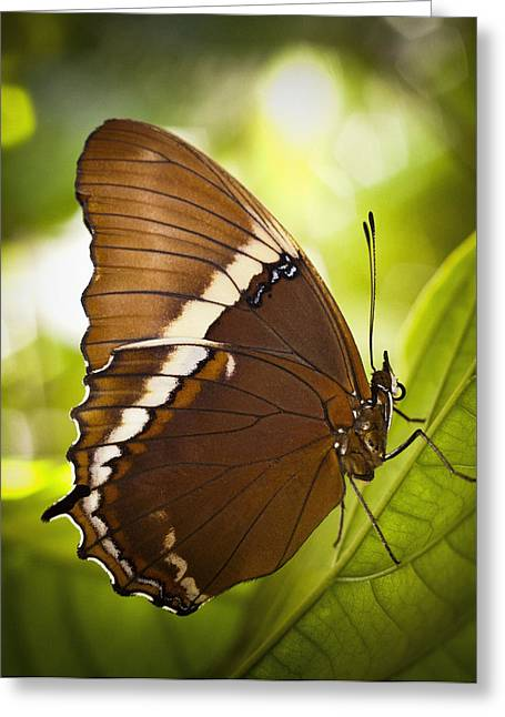 Rusty Tip Butterfly Greeting Card by Bradley R Youngberg
