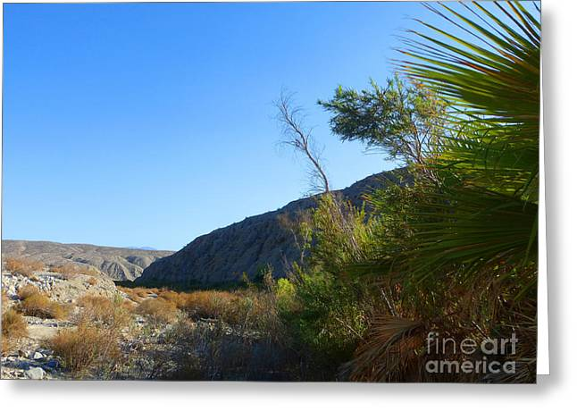 S A F  Palm Springs Five Greeting Card by Tina M Wenger