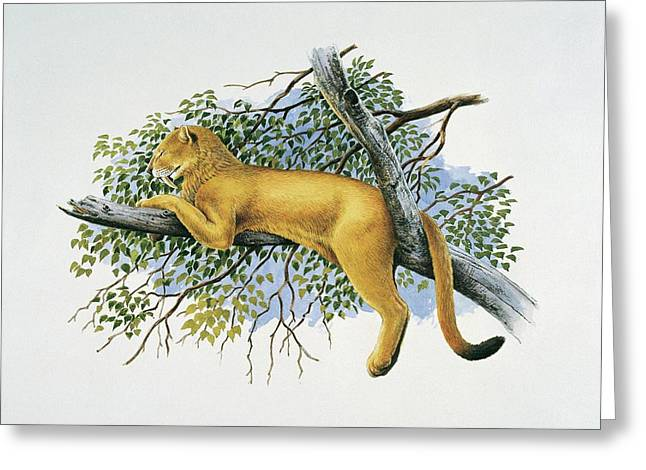 Saber Tooth Lion Greeting Card by Deagostini/uig/science Photo Library