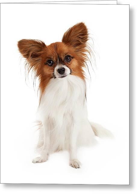 Sable And White Papillon Dog Greeting Card by Susan Schmitz