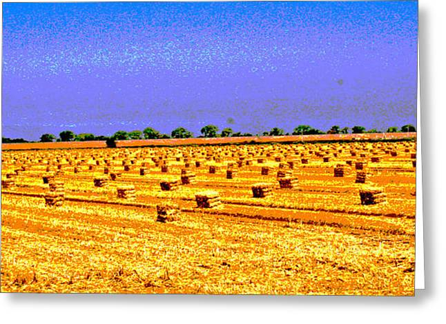 Sacramento Delta Farm Greeting Card