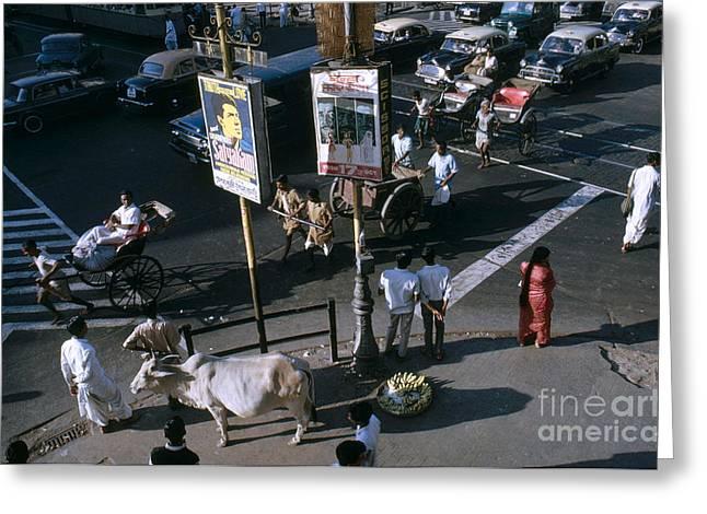 Sacred Cow In Kolkata Calcutta Greeting Card