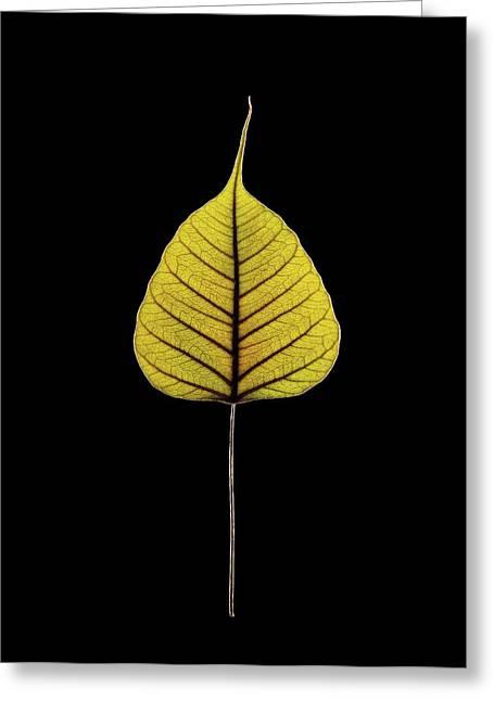 Sacred Fig (ficus Religiosa) Leaf Greeting Card by Gilles Mermet