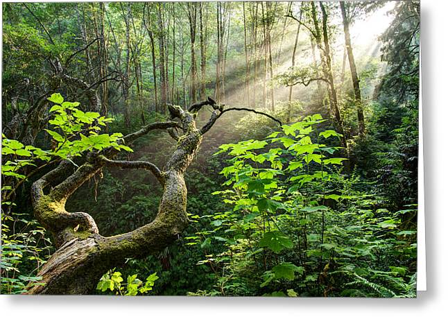 Sacred Grove Greeting Card
