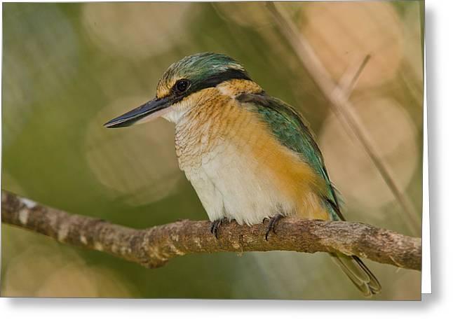 Sacred Kingfisher 3 Greeting Card