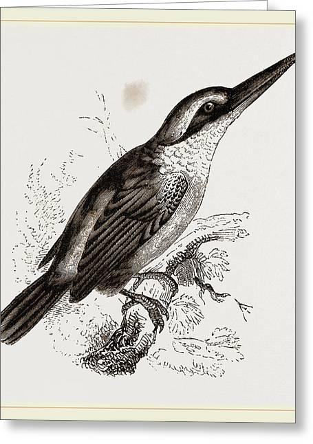 Sacred Kingfisher Greeting Card